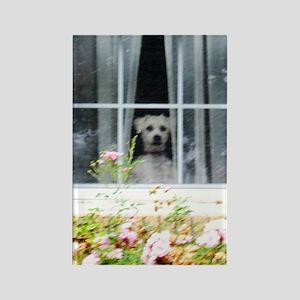 Zak in the windowA Rectangle Magnet