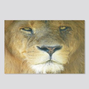 Lion Lposter Postcards (Package of 8)