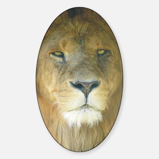 Lion pposter Sticker (Oval)
