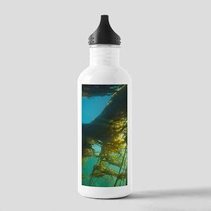 Giant Kelp (Macrocysti Stainless Water Bottle 1.0L