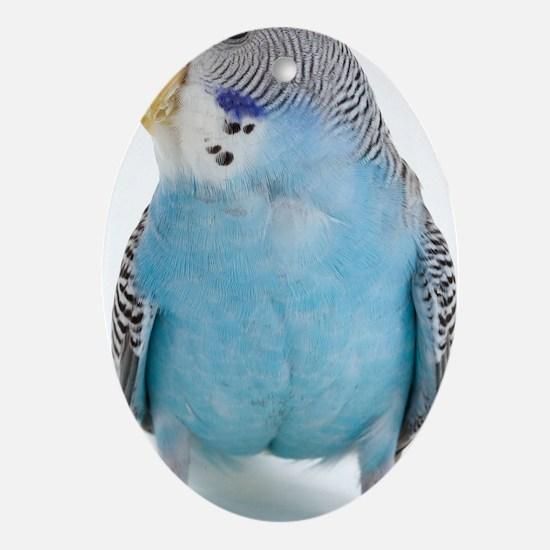 blue parakeet Oval Ornament