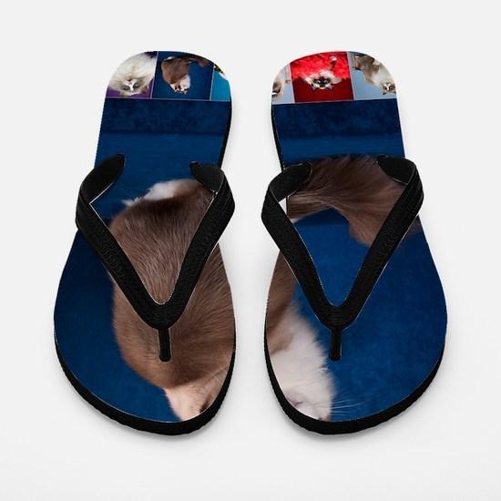 Vertical 2012 Cover Flip Flops