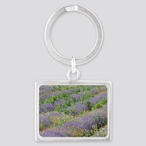 France, Provence. Rows of laven Landscape Keychain