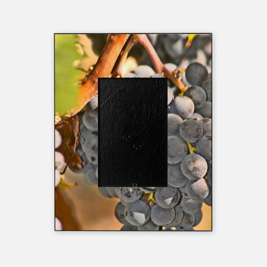A single cabernet Sauvignon bunch of Picture Frame