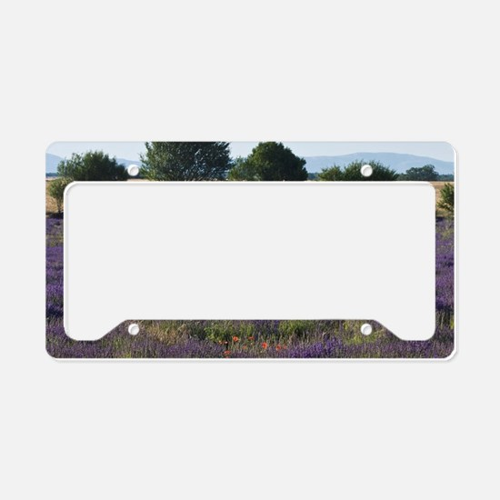 France, Provence. Rows of lav License Plate Holder