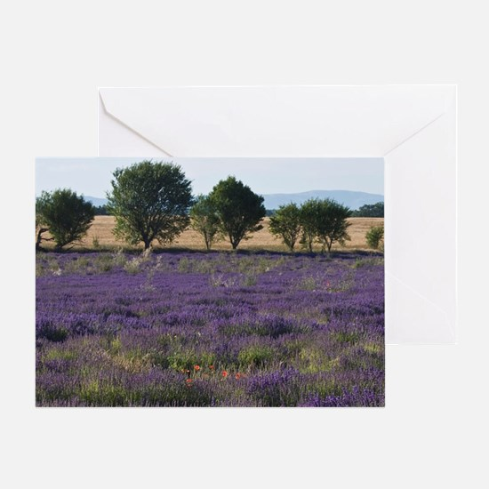 France, Provence. Rows of lavender i Greeting Card