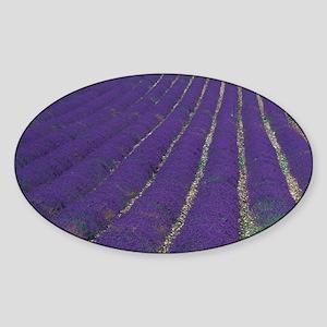 EU, France, Provence, Lavender fiel Sticker (Oval)