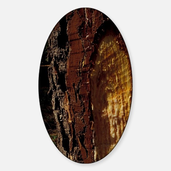 Landes. Dripping resin collection f Sticker (Oval)