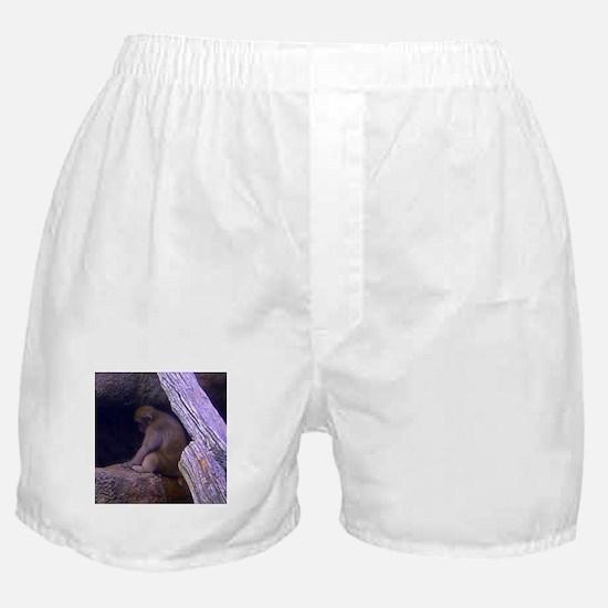 japanese macaque Boxer Shorts