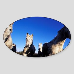 Ile de la Camargue. Camargue Horses Sticker (Oval)