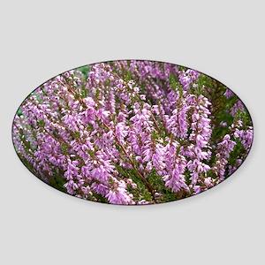 purple heather - wide version Sticker (Oval)