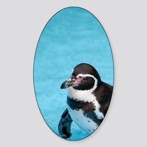 Magellanic Penguin Sticker (Oval)