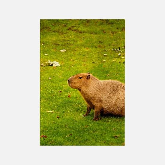 Capybara Rectangle Magnet