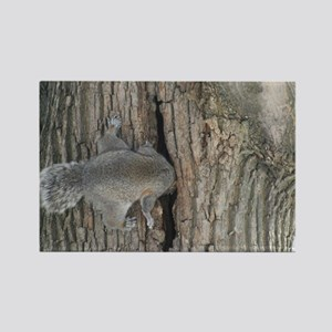 Gray Squirrel Rectangle Magnet