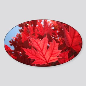 Autumn Leaves 7 Red Fall Art Trees  Sticker (Oval)