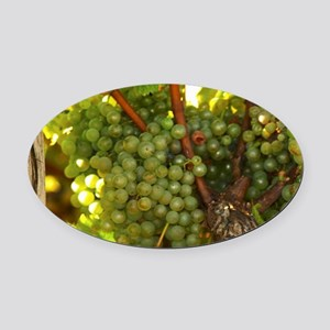 Bunches of Semillon grapes that ar Oval Car Magnet
