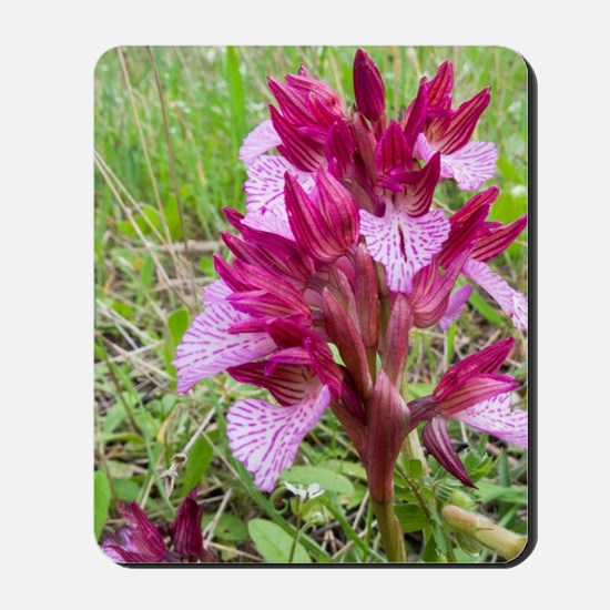 Crete. Butterfly orchid in bloom (Orchis Mousepad
