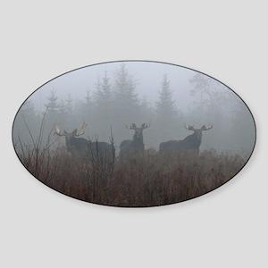 11  Jan. Sticker (Oval)