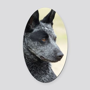 Australian Stumpy Tail Cattle Dog  Oval Car Magnet