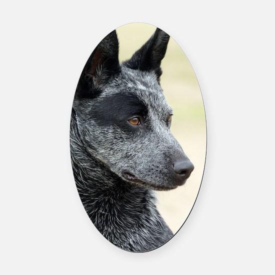 Australian Stumpy Tail Cattle Dog  Oval Car Magnet