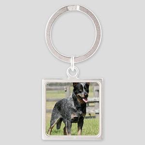 Australian Cattle Dog 9Y749D-017 Square Keychain