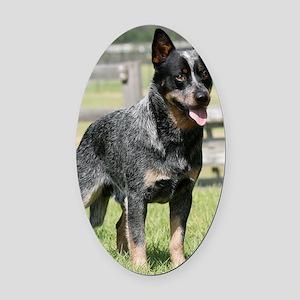 Australian Cattle Dog 9Y749D-017 Oval Car Magnet