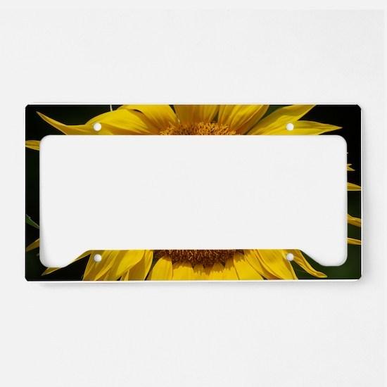 DSC_0466 License Plate Holder