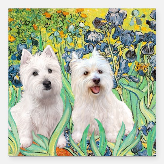"""MP2-rises-Westies 3and11 Square Car Magnet 3"""" x 3"""""""