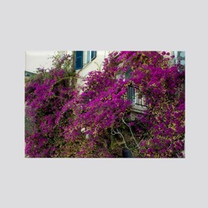 Monterosso. Bougainvillea growing Rectangle Magnet
