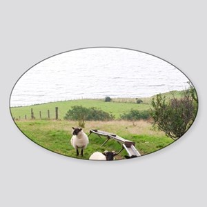County Donegal. Sheep grazing on hi Sticker (Oval)