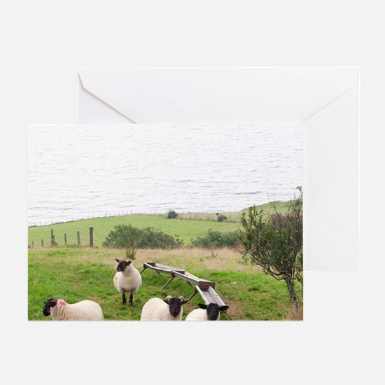 County Donegal. Sheep grazing on hil Greeting Card