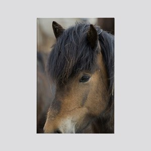 Icelandic horses, Skagafjorour Fj Rectangle Magnet