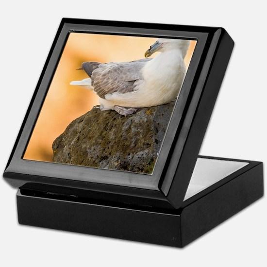 Northern Fulmar guards a nest in Icel Keepsake Box