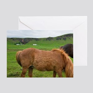 Icelandic Horses graze in southern I Greeting Card