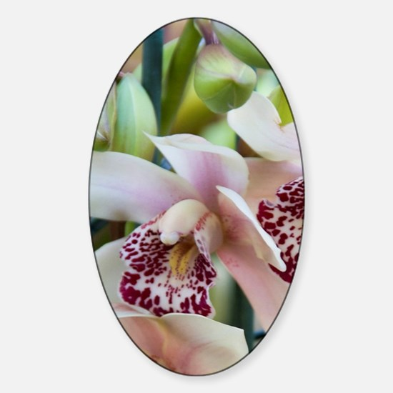 Full frame of Orchids at the Bloeme Sticker (Oval)