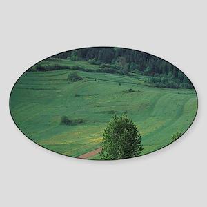 , The Pienny Sromowce Nizne, villag Sticker (Oval)