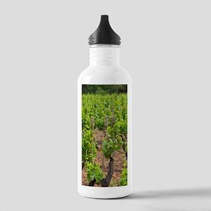 Vineyard, Jerzu, Sardi Stainless Water Bottle 1.0L
