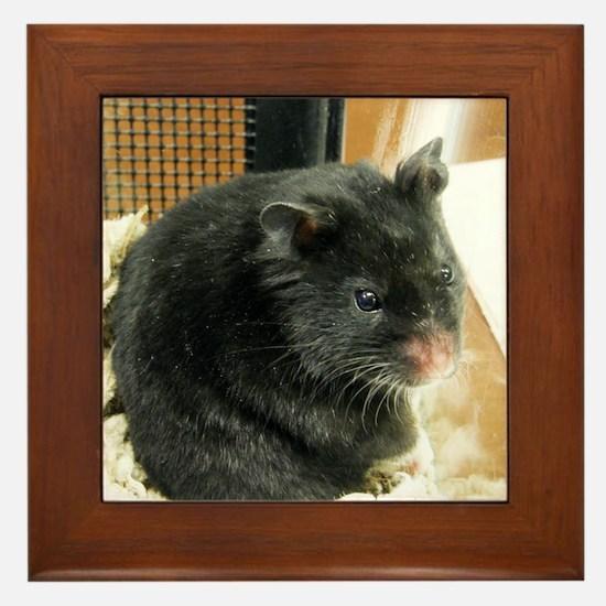 Black Hamster Framed Tile