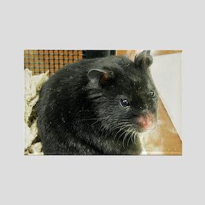 Black Hamster Rectangle Magnet