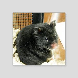 "Black Hamster Square Sticker 3"" x 3"""