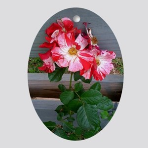 Fourth of July climbing rose Oval Ornament