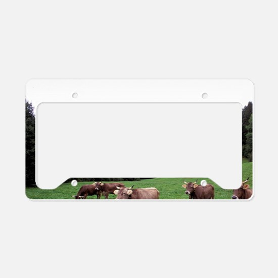 Umbrail Pass. Swiss brown cow License Plate Holder