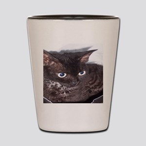 Cat-Sack-1 Shot Glass