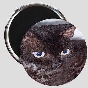 Cat-PJs-1 Magnet