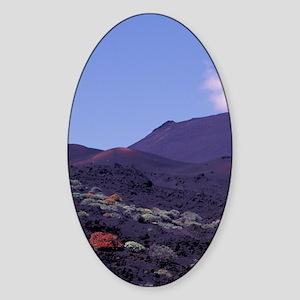 Spain; Canary Isles; La Palma; San  Sticker (Oval)