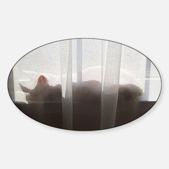 Cat-PJs-3 Sticker (Oval)