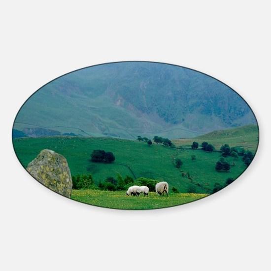 Sheep grazing in distanceingdom, La Sticker (Oval)