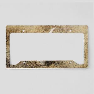 labpuphunt lic License Plate Holder