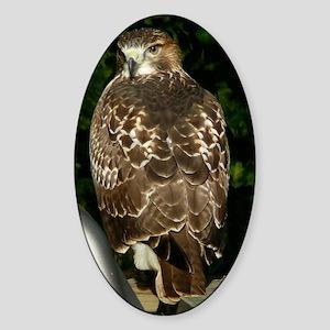 Hawk10x8a Sticker (Oval)
