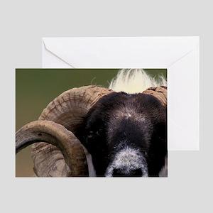 Scotland, Isle of Skye. Sheep portra Greeting Card